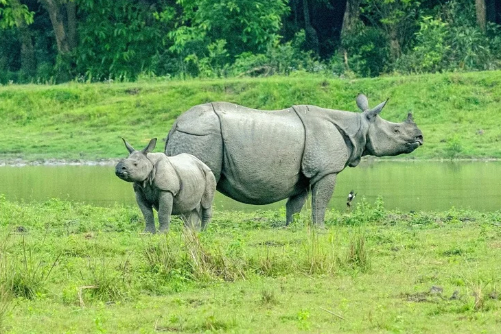 Pobitora Wildlife Sanctuary